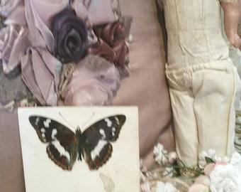 vintage cadburys cocoa card, purple emperor butterfly, antique postcards, vintage butterfly postcard,