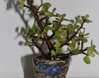 Little succulent pot in midnight blue