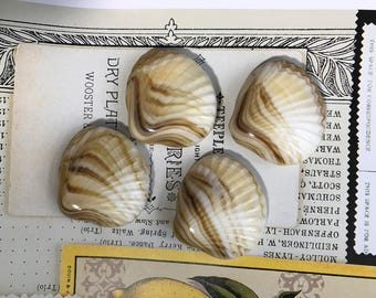 Glass Shell beads,Shell Drops,Vintage Beads,nautical shell beads, Shell Beads,clam shell beads,half drilled beads,vintagerosefindings #532M