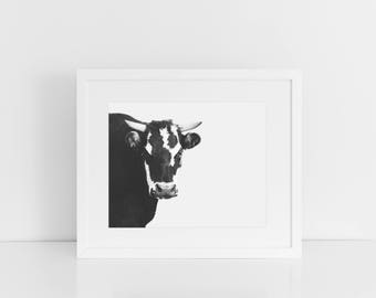 Cow Print, Black and White Modern Cow Photograph, Physical Print