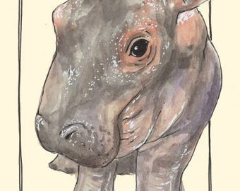 Bashful Fiona the Hippo Watercolor Art Print, Animals, Zoo, Cincinnati Art