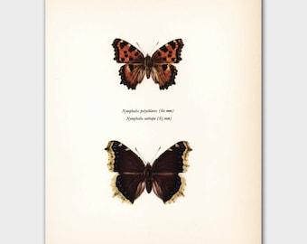 """Butterfly Wall Art (1960s Butterflies Art Print, Cottage Home Decor) """"Camberwell Beauty"""" No. 118-1"""
