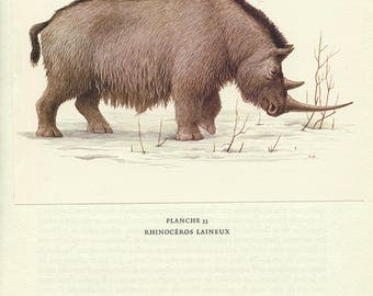 Rhinoceros laineux vintage1970 Illustration de rhinoceros vintage Image de mammouth vintage Illustration animalière Cadeau paléontologie