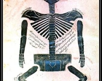 Antique Anatomy Medical Print of Human Body Unique, Anatomy Illustrated