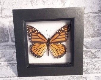 Shadowbox, Butterfly Art, Insect Art, Handmade, Butterflies, Insect, Curiosity, Entomology, Butterfly Shaddowbox, Real Butterfly.