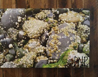 Nature Photography - Canvas Art - Nature Print - Wildlife Photography - Ocean Pebbles Covered in Barnacles - Macro print - Beach