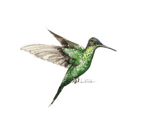 Hummingbird, limited edition A4 gicleé print