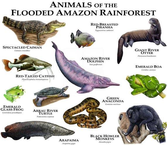 Animals of the Flooded Amazon Rainforest