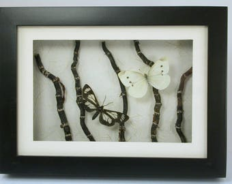 Black & White Montage -Real Framed butterflies