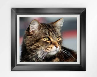 Cat photograph cats photo close-up brown yellow white animal picture cat portrait home decor decoration face mustache whiskers