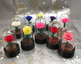 Beauty and the Beast Rose, Beauty and the Beast, white rose, rose, forever rose, Christmas rose, Rose, mini rose, beauty and beast wedding