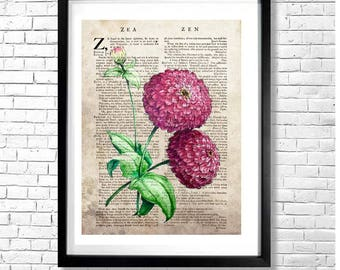 Z FOR ZINNIAS - Pink Magenta Zinnia Vintage Botanical Watercolor Illustration on an Old Dictionary Page Background Art Print Poster