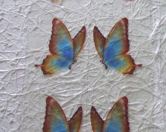 Sheet with 3 sets of wings