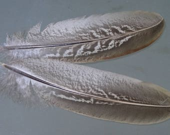 Set of 10 natural pheasant wing feathers