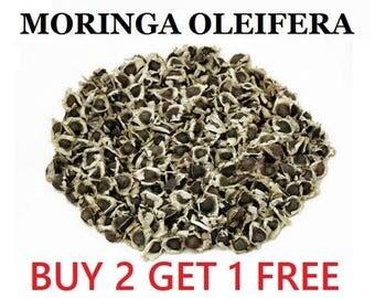 Moringa Plant Seeds