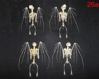 Taxidermy  Real Bat Cynopterus Brachyotis Skeleton 4 Pcs