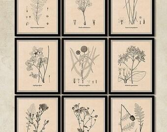 Set of 9 prints, Botanical printable set, Vintage print set, Flower print set, Wall art, Instant download prints, Art print, Flower art, JPG