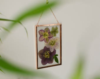 """Real pressed flower wall hanging   hellebore   4x6"""" glass with copper edging   glass herbarium   botanical home decor"""