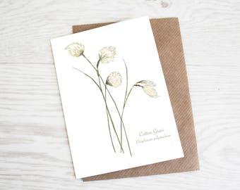 Cotton Grass, Botanical Wildflower Print, Greeting Card