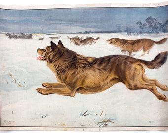 Dog, educational chart , 1891