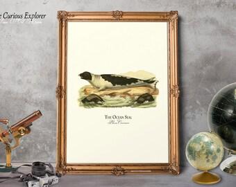 Seal Art Print, Funny Seal Prints, Seal Baby Shower, Animal Prints, Seal Prints, Seal Wall Decor, Seal Child Gift - E18_4