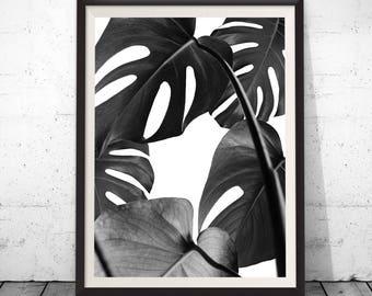 Monstera Leaf, Nature Photography, Leaf Art, Monstera print, Tropical Leaves, Black and white photo, Botanical art, Modern Print, Leaves Art