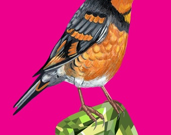 Varied Thrush Bird Print, Thrush Poster, Varied Thrush Print, Varied Thrush Poster, Bird Art, Varied Thrush Wall Art, Bird Decor