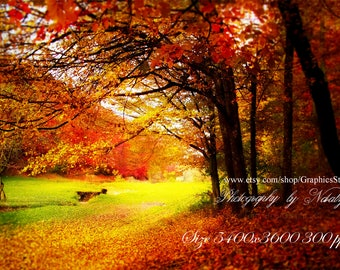 Autumn background fall forest digital backdrop Fall background size 5400x3600 300ppi ( image 1709161)