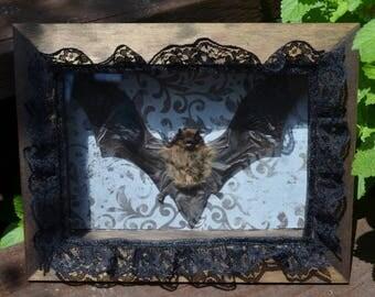 Victorian Gothic Taxidermy Bat Shadow Box