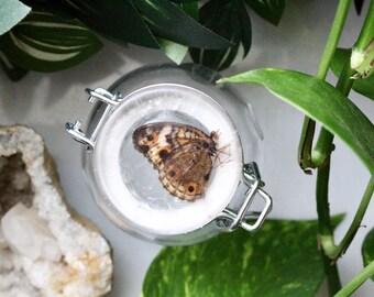 Crystallized Butterfly Stash Jar