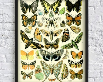 Vintage butterfly print butterfly collection print butterfly gallery wall art decor botanical illustrations vintage art yellow brown Art-138