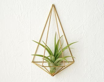 Air plant wall plant hangers polyhedron No02