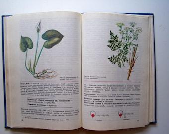 poisonous animals, botanic illustration, soviet book, poisonous plants, russian vintage,  botanic illustration, floral illustrations