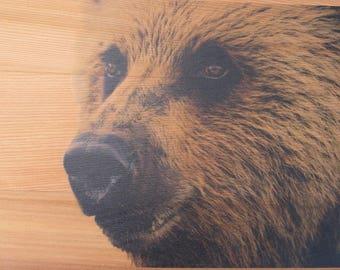 Grizzly Bear Cedar Wood Print