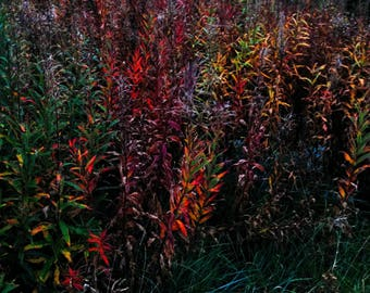 Louth Autumn Colours