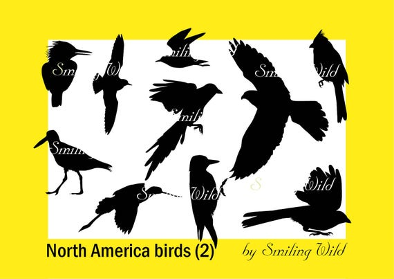 bird silhouette north america bird svg cutout png vector graphic file magpie svg falcon kingfisher silhouette woodpecker printable avocet from smilingwild