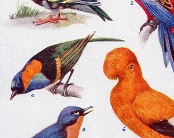 Set of Four Vintage Bird Charts #3