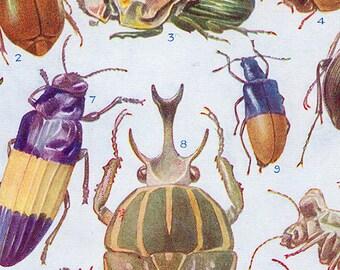 Set of Three Vintage Beetle Charts