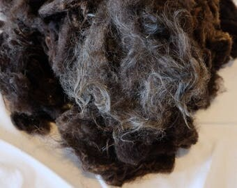 Wool of the black Ouessantschaf, washed
