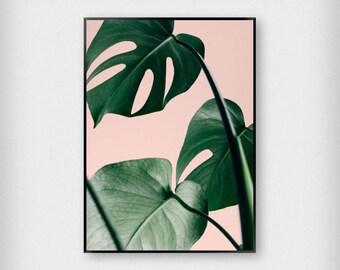 Monstera Leaves on Pink Print | Botanical | Pink - Green | Tropical - Leaf - Poster
