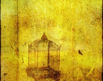 "Color ""cage"" art photo 30 x 28 free shipping! Fine art paper"