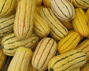50 DELICATA SQUASH Striped Sweet Potato Cucurbita Pepo Vegetable Seeds