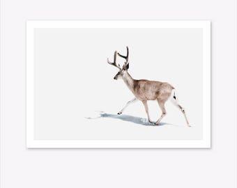 Deer Print, Nature Prints, Scandinavian Print, Woodland Animals, Nature Photography, Landscape Print, Scandi Home Decor, Nordic Poster