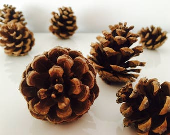 Pine Cone, decoration, fall, nature decor, pine cones, autumn decoration