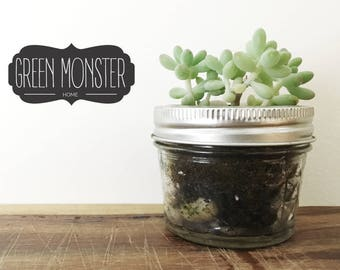 Live succulent plant, Jelly Bean plant for your desk. Plants size .75 - 1.5 inch in cute glass jar. Small Plant for Desk, Gift for Coworkers