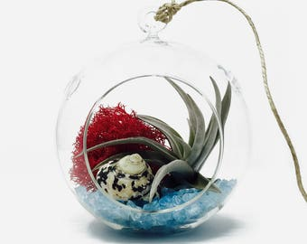 Fruit Punch Air Plant Terrarium Kit - Gift Boxed