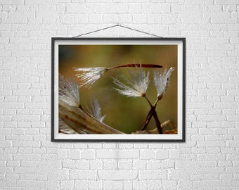 Nature Photography Macro, Dandelion Photography, Story Art, Procession, Funeral, Transition, Esoteric Macro Photo, The Poetry of Nature