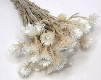 Dried Everlasting flower Bouquet/Sewejaartjies  Bunch/Flower bunch/Dried Flowers/Dried floral arrangement/natural dried plant/Floral bouquet