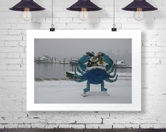 Maryland Blue Crab in Winter Fine Art Photograph