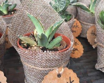 Piante grasse in vaso etsy for Tutte le piante grasse
